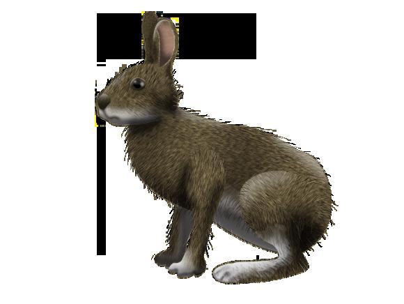 ニホンノウサギの画像 p1_15