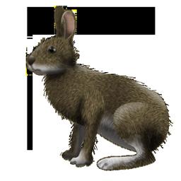 ニホンノウサギ256