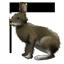 ニホンノウサギ64
