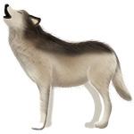 ハイイロオオカミ