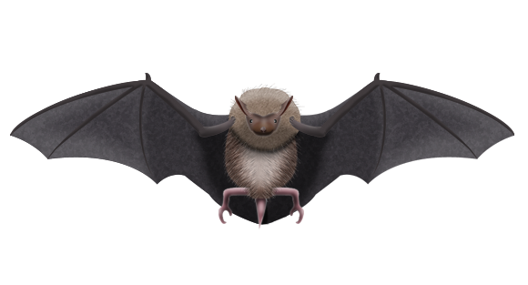 アブラコウモリの画像 p1_1