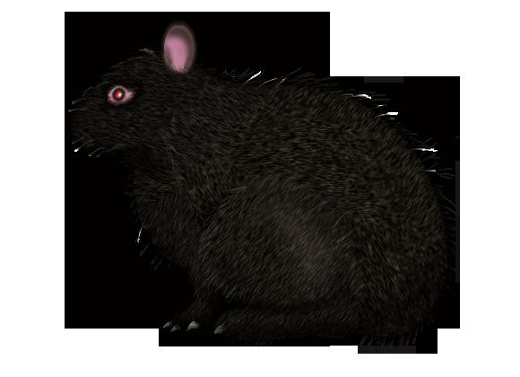 アマミノクロウサギの画像 p1_21