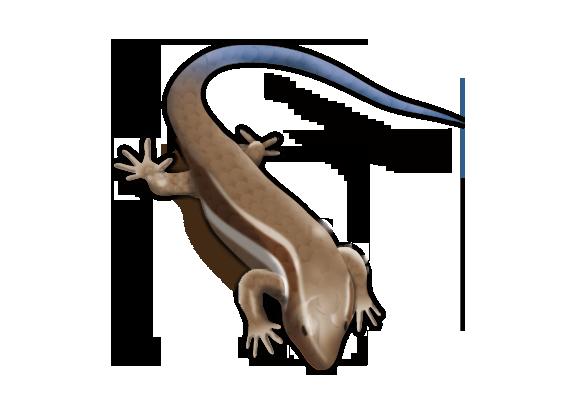 ニホントカゲの画像 p1_30