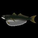 深海魚オニボウズギス
